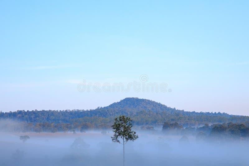 Alleen of enige men boom met Berg en bosdekking met weinig wit vertroebelt op de ochtendtijd royalty-vrije stock foto's