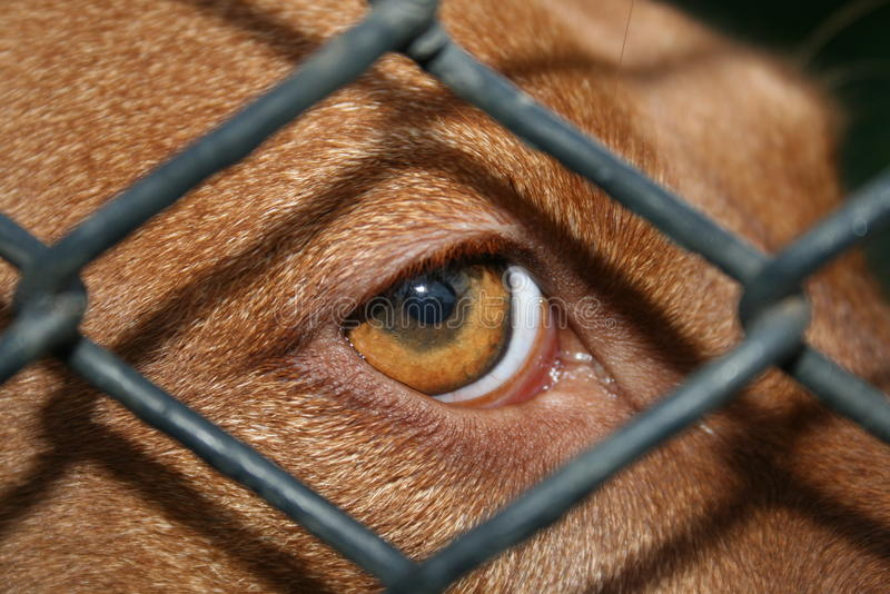Alleen hond royalty-vrije stock fotografie