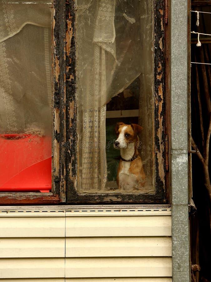 Alleen hond dichtbij venster royalty-vrije stock afbeeldingen