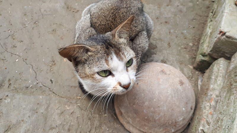 Alleen kat stock afbeelding
