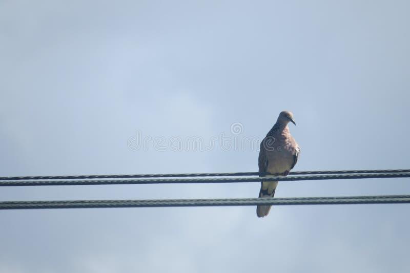 Alleen vogelzitting stock afbeeldingen