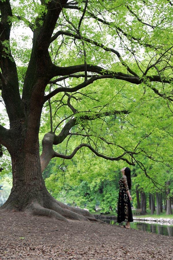 Alleen vrouw onder een grote bloesemboom stock afbeeldingen