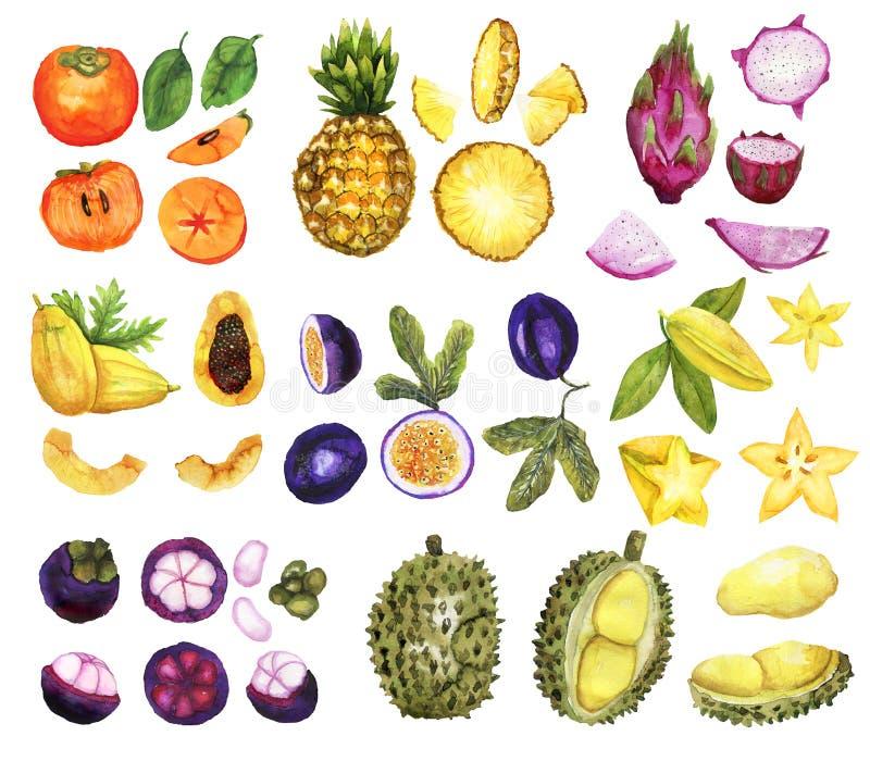 Allegagione tropicale disegnata a mano illustrazione di stock