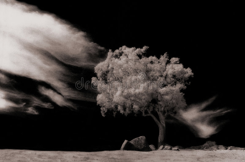 Allein Baum lizenzfreie stockfotografie