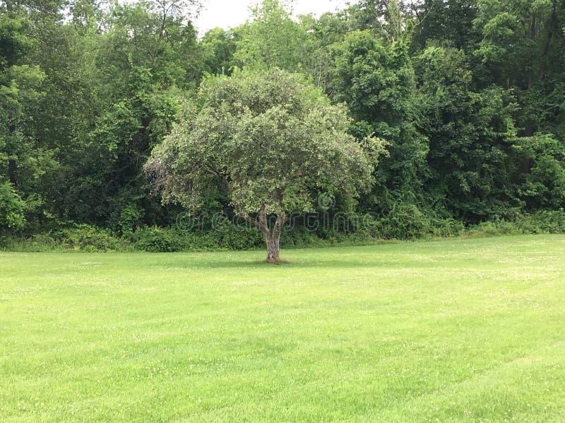 Allein Baum stockbilder