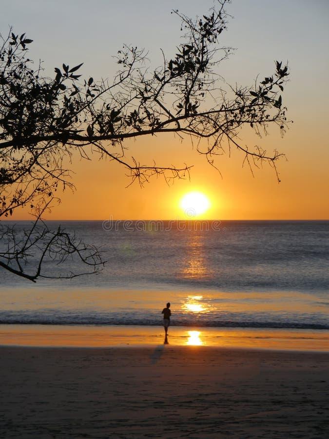 Allein bei Sonnenuntergang, Guanacaste, Costa Rica stockfoto