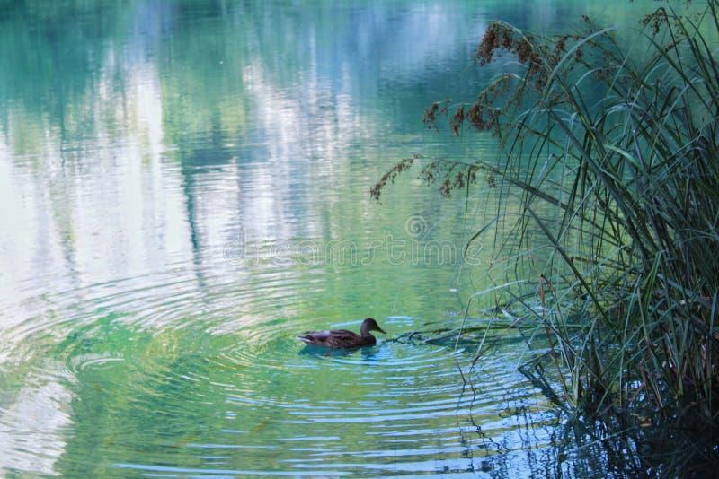 Allein in einem See lizenzfreie stockfotos