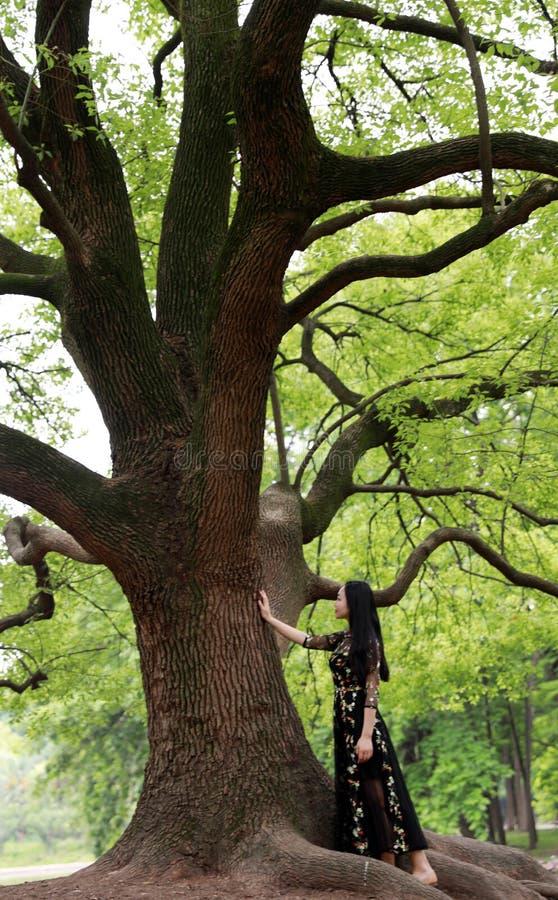Allein Frau unter einem gro?en Bl?tenbaum stockfotografie