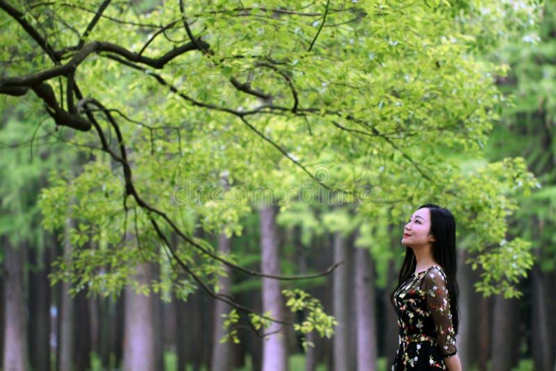Allein Frau unter einem gro?en Bl?tenbaum stockfoto