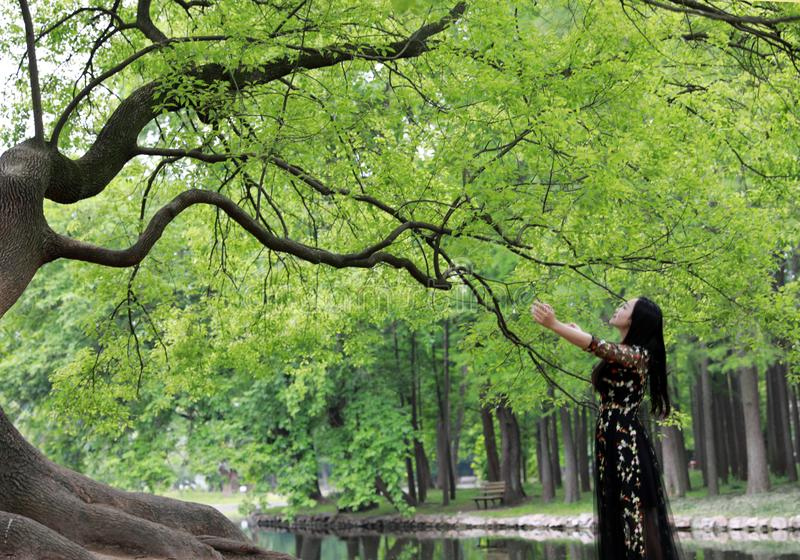 Allein Frau unter einem gro?en Bl?tenbaum Genie?en der Natur lizenzfreie stockfotos