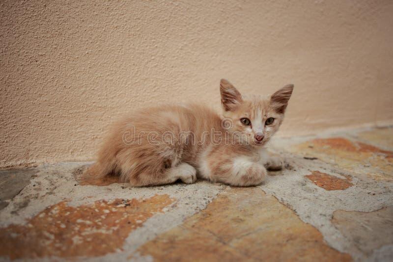 Allein kleines obdachloses Kätzchen auf der Straße stockfotos