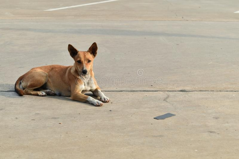 Allein obdachloser Hund im Autoparken in der Stadt stockfotos