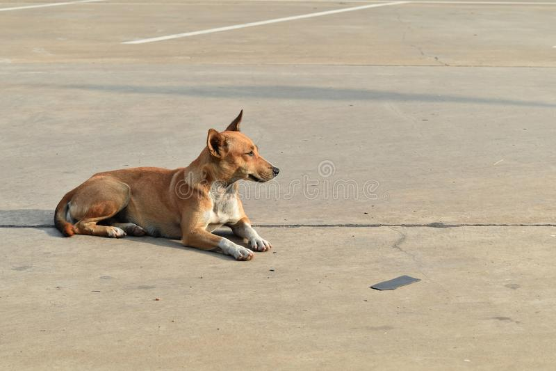 Allein obdachloser Hund im Autoparken in der Stadt lizenzfreie stockfotografie