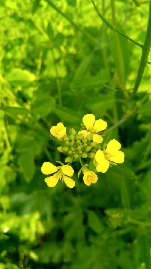 Allein stehende Blume lizenzfreies stockbild