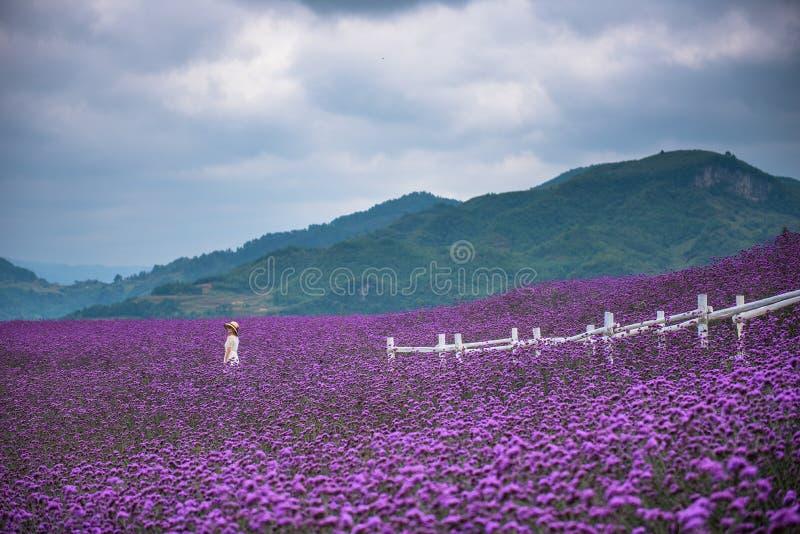 Allein stehende Frau auf dem großen Lavendelgebiet lizenzfreie stockbilder