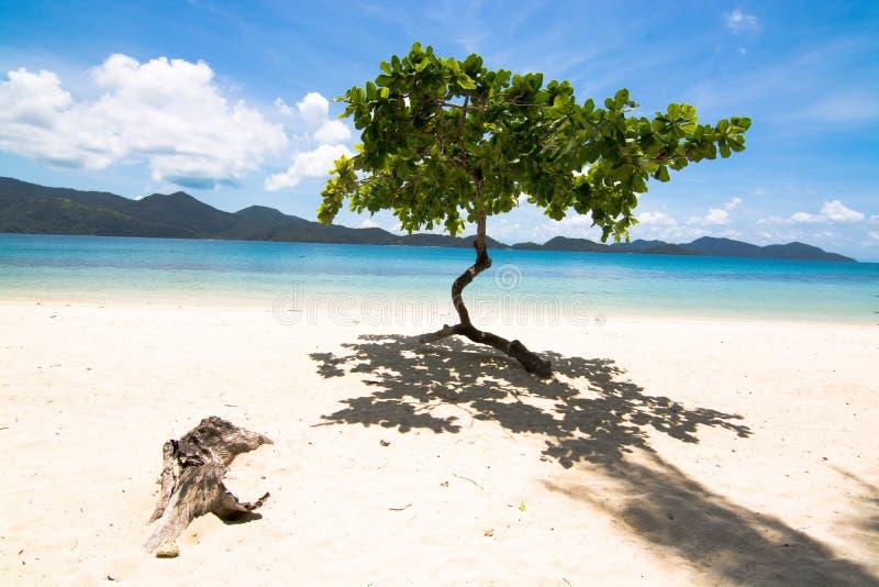 Alleinbaum auf dem Strand lizenzfreies stockfoto