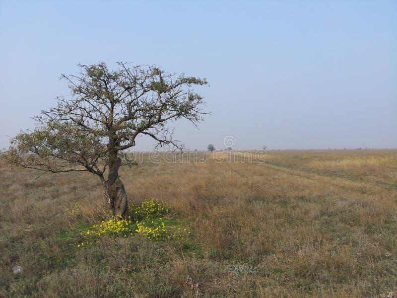 Alleinbaum im Grasland lizenzfreie stockfotos