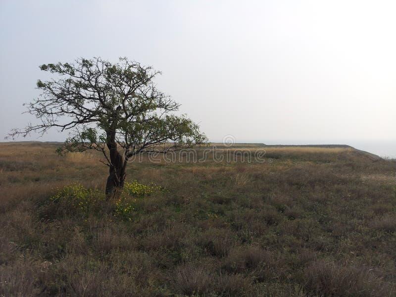 Alleinbaum im Grasland lizenzfreie stockbilder