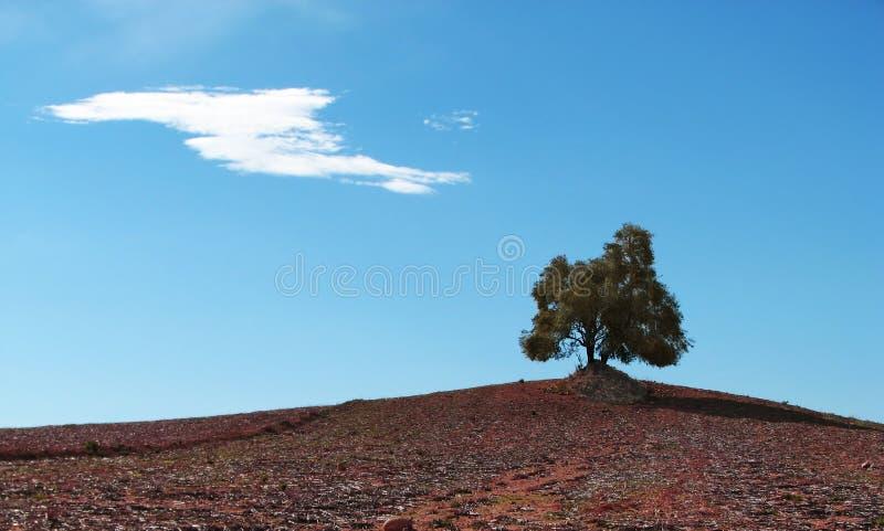 Alleinbaum und die Wolke stockbild