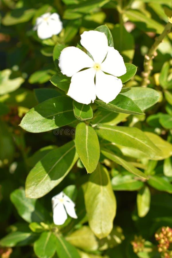 Alleine Blume stockfoto