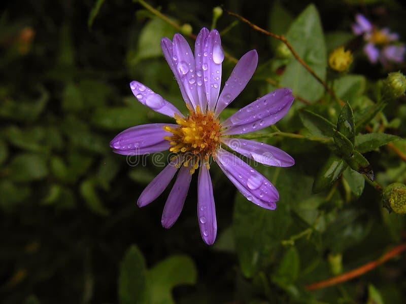Download Alleine im Regen stockbild. Bild von purpurrot, regen, wasser - 29631