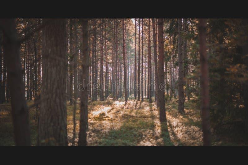 Alleine im Wald lizenzfreie stockbilder