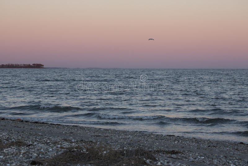Alleine Möve nach Sonnenuntergang an Milford-Punkt, Connecticut stockfotografie