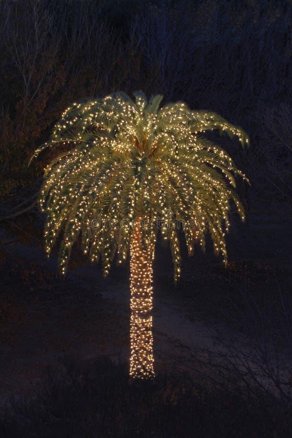 Alleine Palme verziert mit Weihnachtsleuchten stockfotos