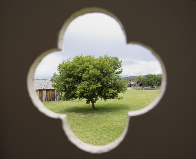 Alleiner Baum lizenzfreies stockbild