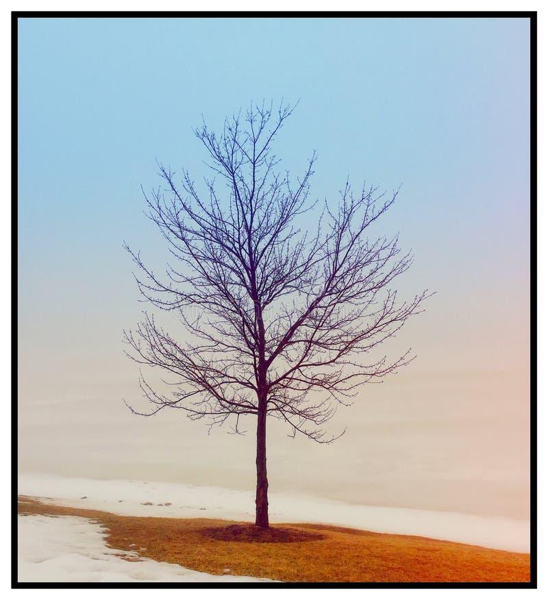 Alleiner Baum lizenzfreie stockfotos