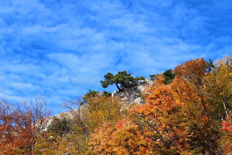 Alleiner Baum des Herbstes auf einen Berg stockbild