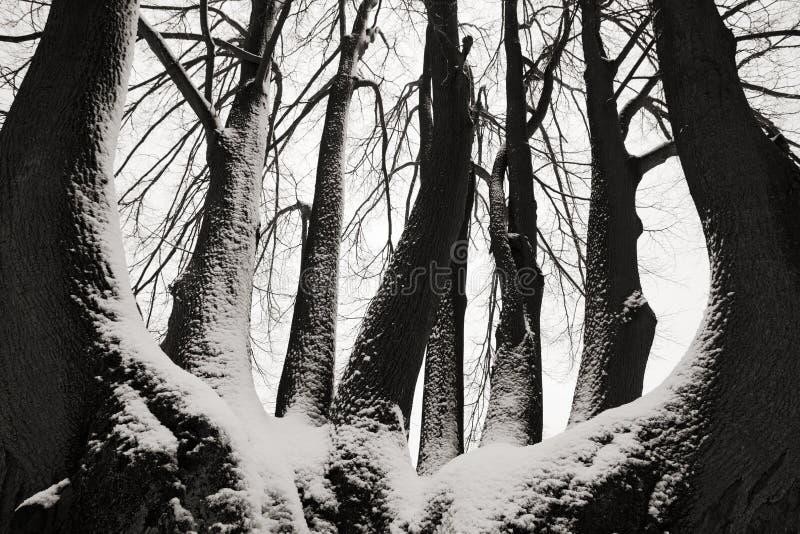 Alleiner Baumstamm im Winter, in der schneebedeckten Landschaft mit Schnee und im Nebel, nebeliger Wald im backgroud, Kunstansich stockfotografie