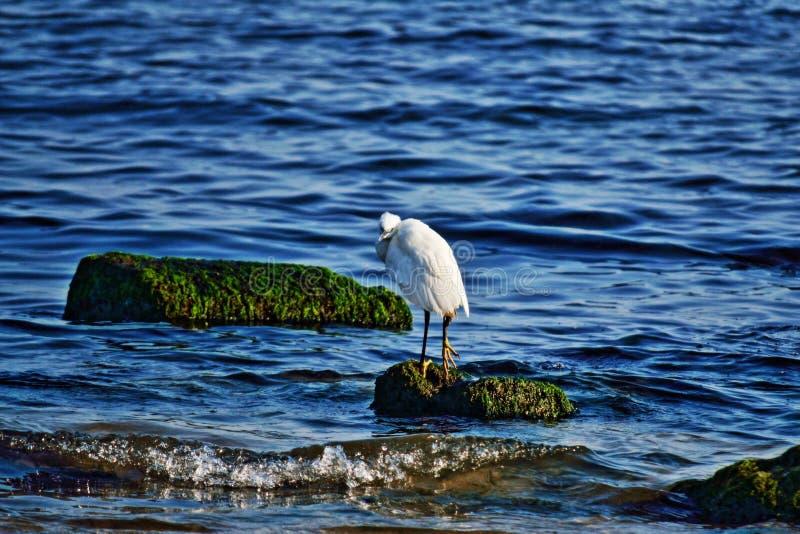 Alleiner weißer Vogel auf Seefelsen lizenzfreie stockfotografie
