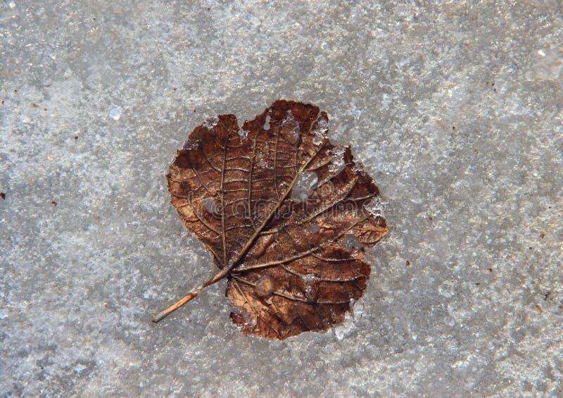 Alleines verwelktes braunes Blatt auf eisiger Oberfläche stockfotografie