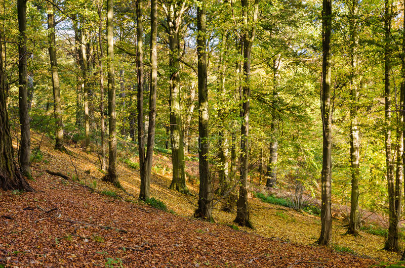 Allen Banks Autumn Trees Stock Photography
