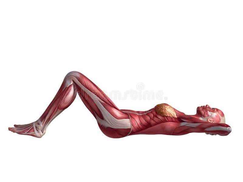 Allenamento femminile dell'ABS illustrazione vettoriale