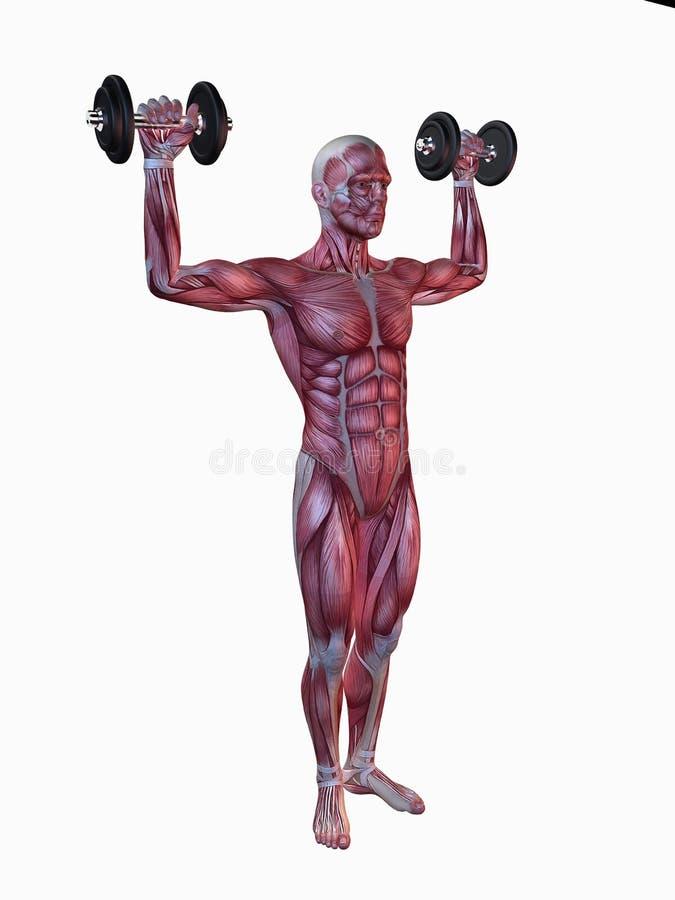 Allenamento maschio - allenamento della spalla illustrazione di stock