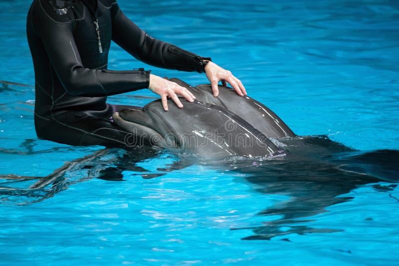 Allenatore maschile con due delfini in un oceanario interno L'uomo tocca e gioca con i mammiferi delfini Terapia dei delfini in a fotografia stock libera da diritti