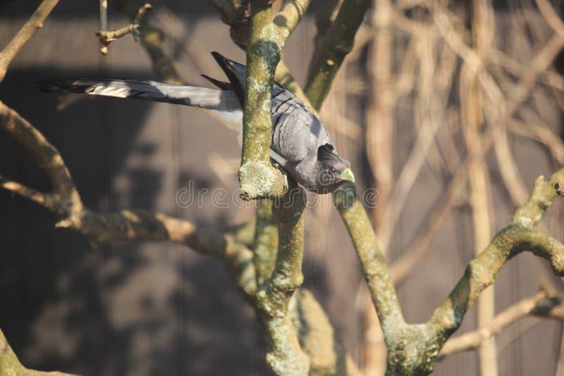 aller-loin-oiseau Blanc-gonflé photo libre de droits