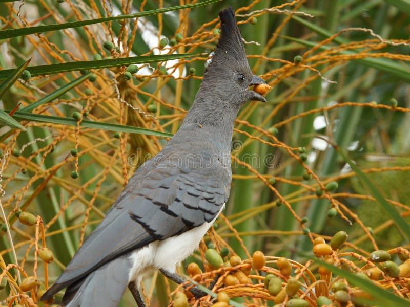 Aller-loin-oiseau, Ethiopie, Afrique photo libre de droits