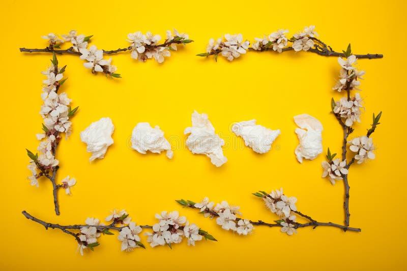 Allergi och rinnande näsa, begrepp Servetter för näsan i en ram av blommor royaltyfria foton