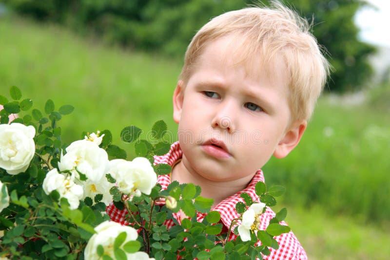 allergiblommor har I royaltyfria foton
