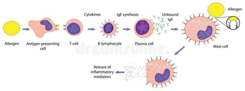 Allergic response stock illustration