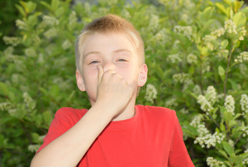 allergie stockfotos