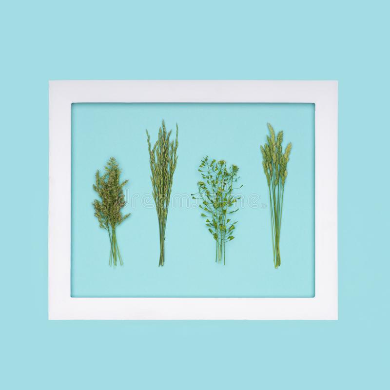 Allergie, Allergenen, Seizoengebonden allergieën De minimale vlakte van de Grasallergie lag stock afbeeldingen