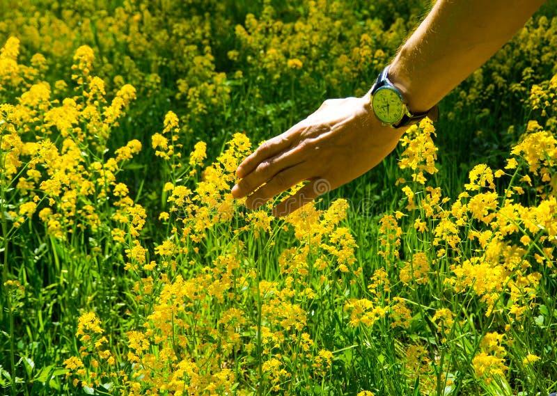 Allergische reacties om bloemen, stuifmeel op te springen royalty-vrije stock foto's