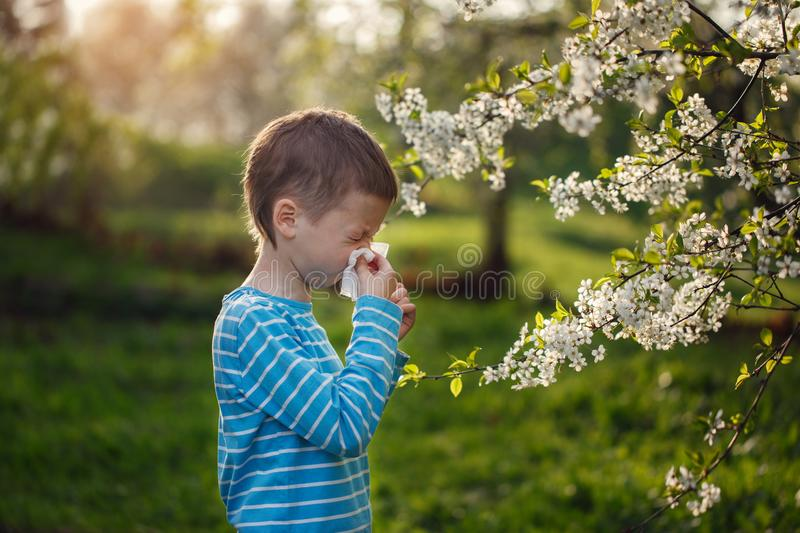 Allergy concept. Little boy is blowing his nose near blossoming flowers.  royalty free stock photo