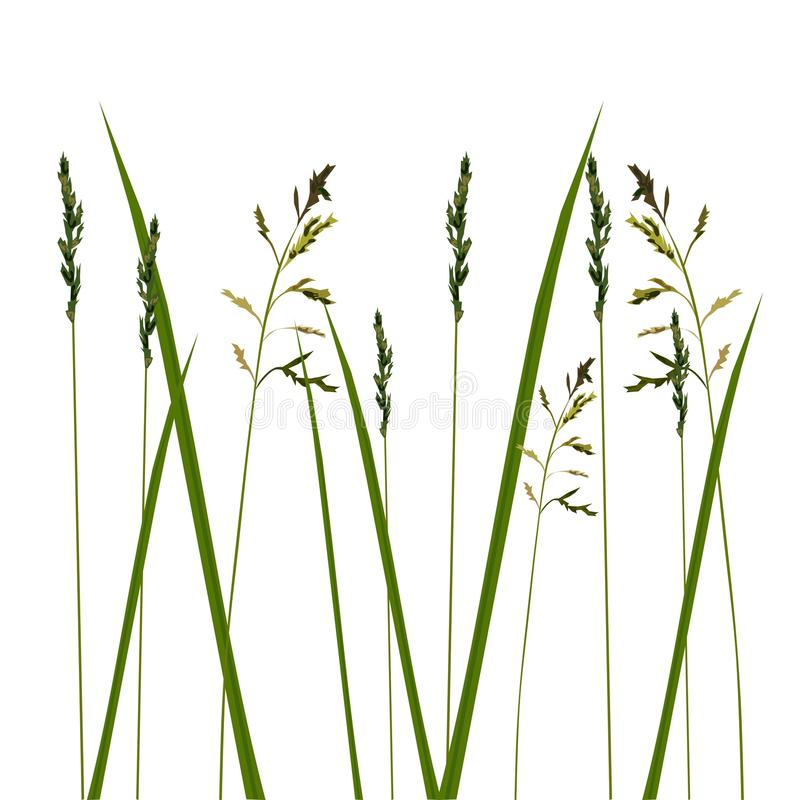Allergy grass pollen isolated stock illustration