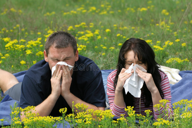 Allergy Sufferers. An allergy sufferers blows their noses