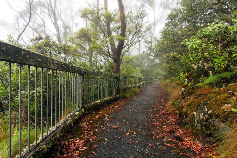 Allerta del punto, parco nazionale della Nuova Inghilterra, AU fotografia stock libera da diritti